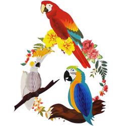 - Papağan Petek Süs 3 'lü Set